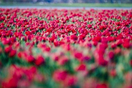 flowers Stock Photo - 2400269