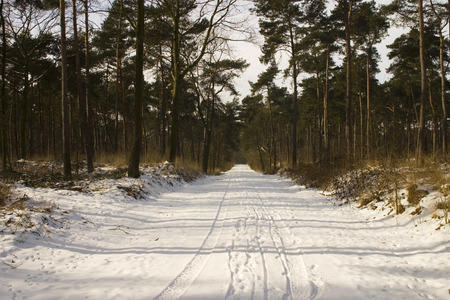 snowy forrest road Stock Photo - 2396592