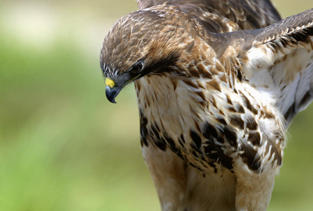 big bird Stock Photo - 2396617
