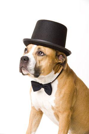beautifull dog groom Stock Photo - 2510505