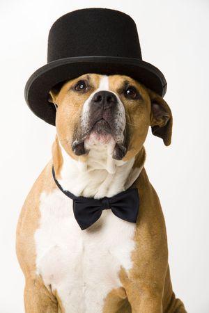 beautifull dog groom photo