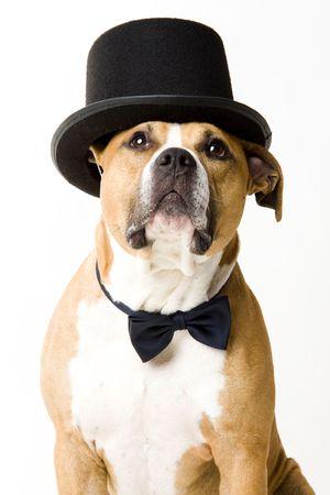 bajo y fornido: Rubias perro novio