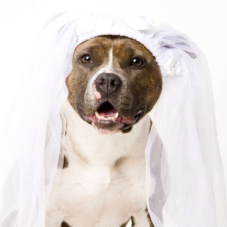 beautifull dog bride photo