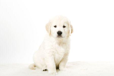 cute puppy Stock Photo - 2510559