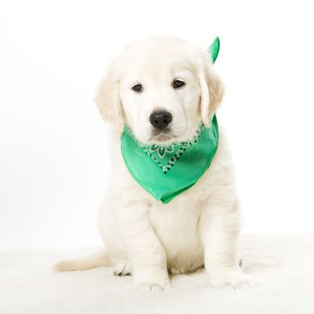 cute puppy Stock Photo - 2513506