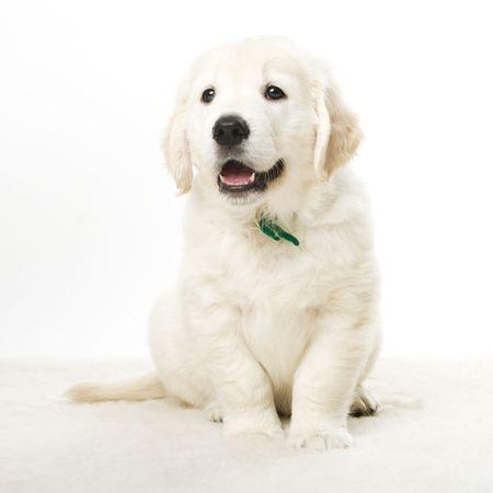 cute puppy Stock Photo - 2510521