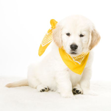 cute puppy Stock Photo - 2510519