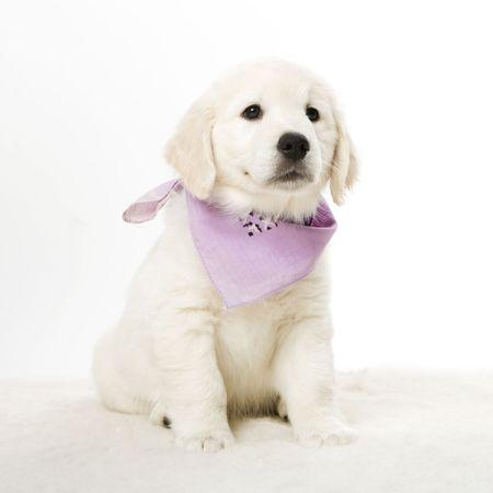 cute puppy Stock Photo - 2513504