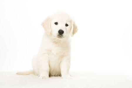 cute puppy Stock Photo - 2510552