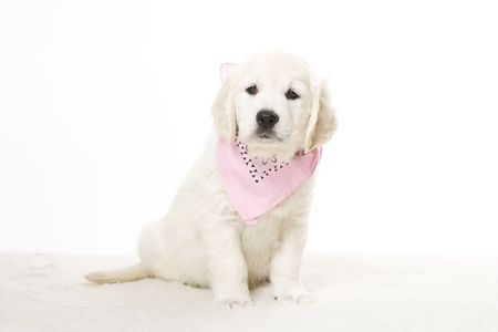cute puppy Stock Photo - 2510534