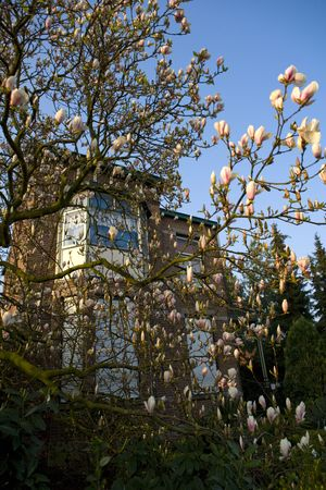 old building with blossom in front photo