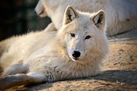 wold: Wold