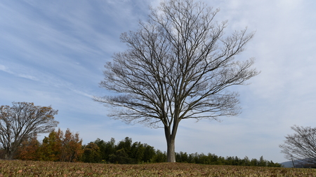 alone tree park