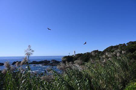 coastline cape siono in late summer