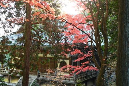 autumn leaves at kiyomizu garden 報道画像