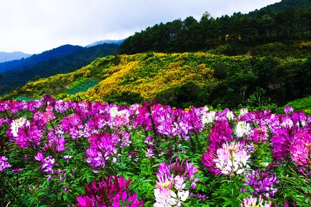 flower on the mountain Stock Photo - 7096369