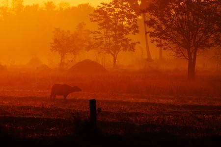 in the farm photo
