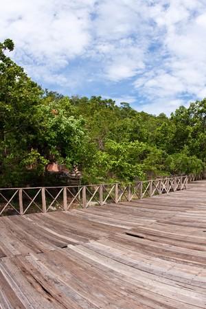 log deck: the wood veranda