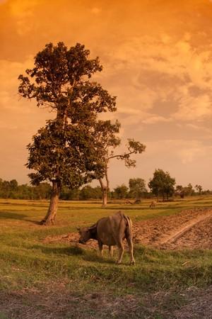thai country photo