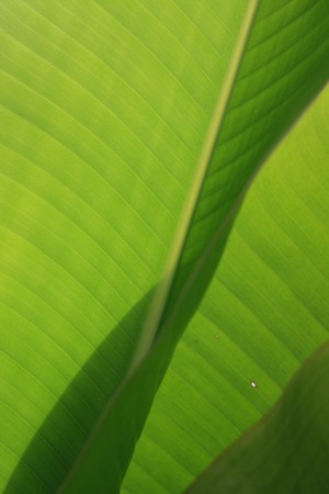 door leaf: green leaf background