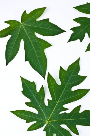 green leaf on white background Stock Photo - 7337482