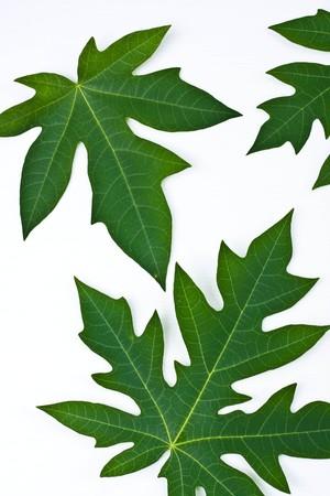 green leaf on white background Stock Photo - 7337482