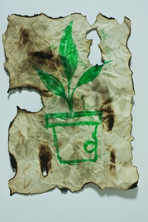 green tree on the old paper photo