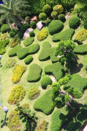 in the garden photo