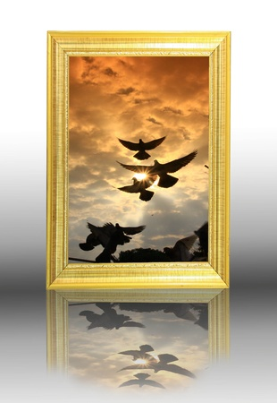 bird on picture frame photo