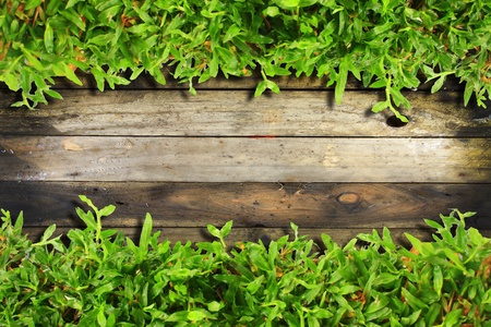 green leaf frame on the wood wall photo