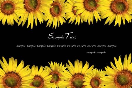 sunflower Stock Photo - 9709944