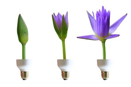 flower on lamp photo