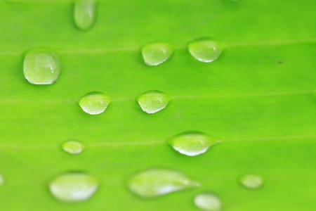 water drop on green leaf photo
