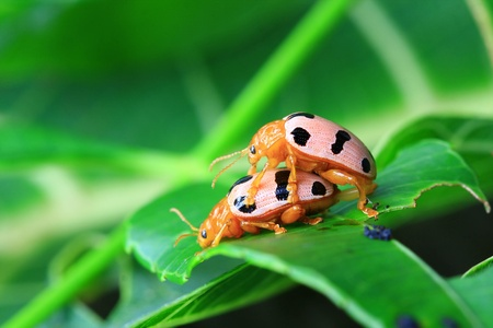bug sex