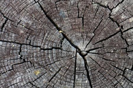 cutting edge: pattern on tree
