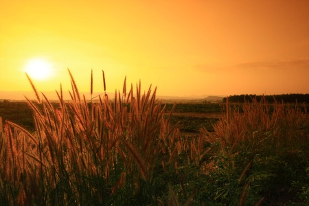 sunset on the meadow