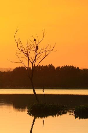 on the lake photo