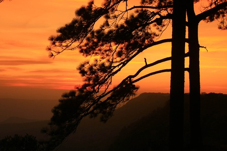 silhouette of sunset photo