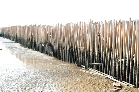 bamboo wall on the beach photo