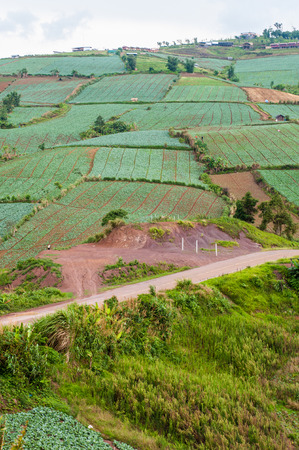 rowth: cabbage farm on the montain Stock Photo
