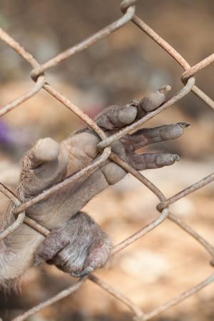 persecution: hope  Stock Photo