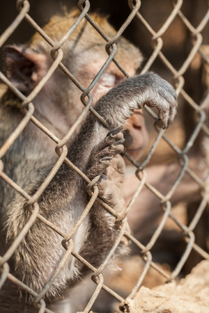 persecution: monkey in cage