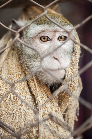 couching: monkey in cage