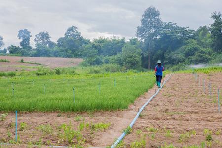 pivotal: vegetable farm