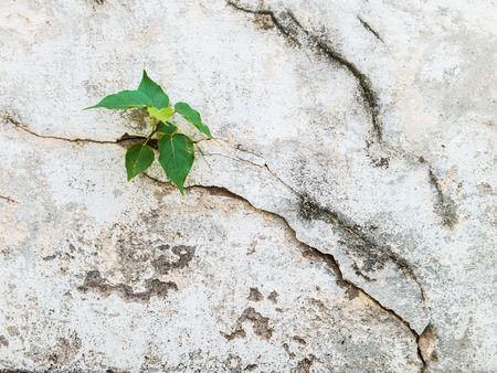 Trees on the cracks of cement cracks  photo