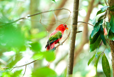 maccaw: red bird in the forest