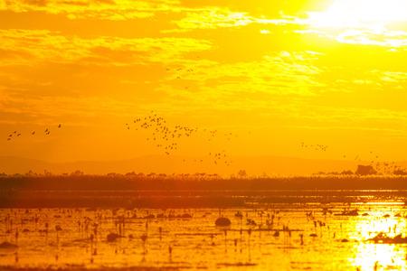Orange sunset sky on the lake. photo