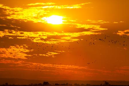 Orange sunset sky photo