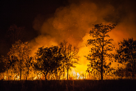 Forest fires caused by burning and destroying weeds. Banco de Imagens