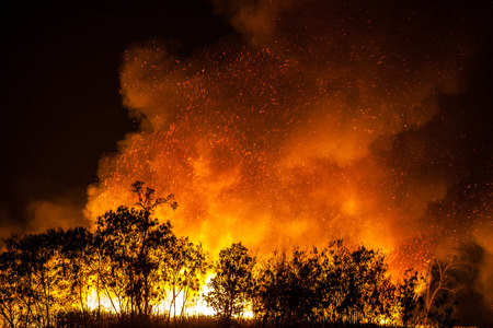 burning bush: Fire caused by burning weeds Thailand.